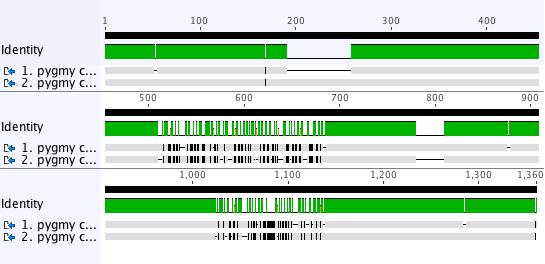 DNA_alignment_highlight