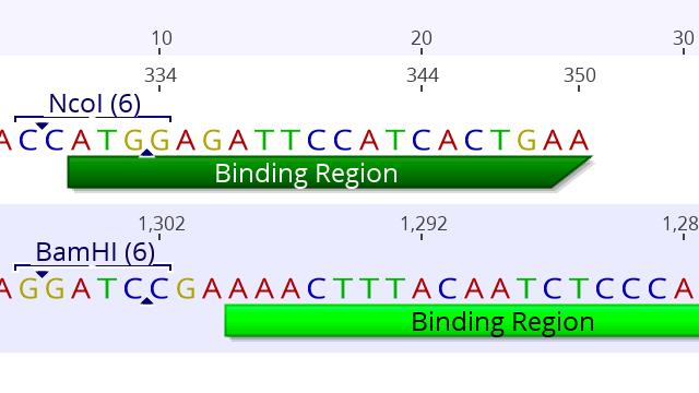Cloning - Primer Tutorial
