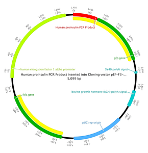Genome and plasmid annotation tools