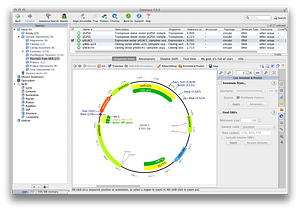Plasmid and restriction mapping