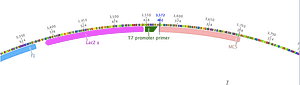 Primer design tool for PCR and sequencing primers